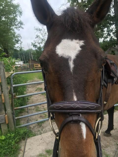 saddle pad fit