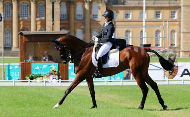Bettina Hoy and Seigneur Medicott take control of the CCI3* on the first day of dressage at Blenheim Palace International Horse Trials Photo by Samantha Clark