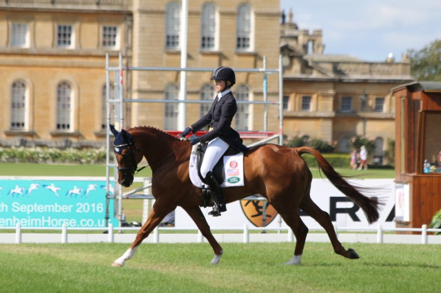 Holly Payne Caravella and Santino move into the top after the first day of dressage at Blenheim Palace International Horse Trials CCI3* Photo by Samantha Clark