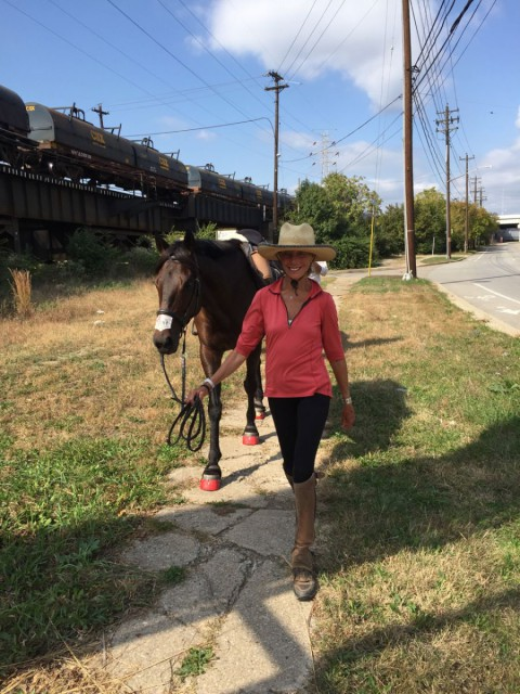 Nothing seems to perturb Primitivo - walking calmly through the outskirts of downtown Cincinnati with Valerie Ashker. Photo by Samantha Clark