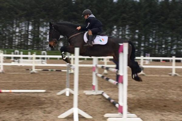 Arrabella. Photo courtesy of Courtney Cooper via Sport Horse Nation.