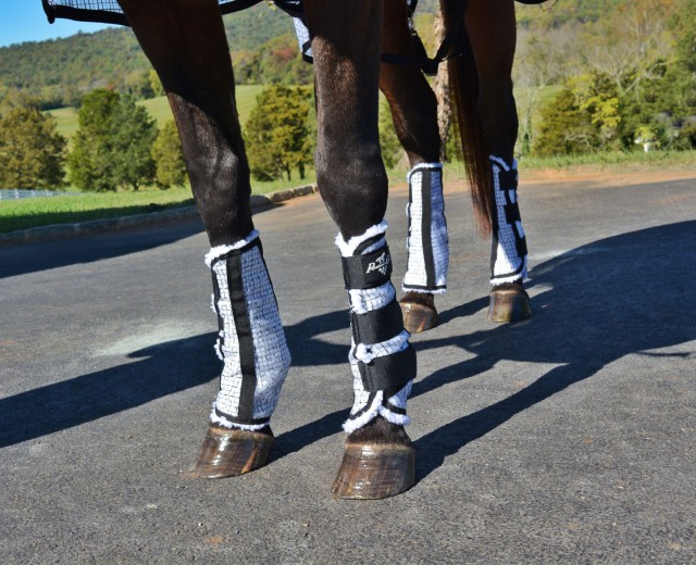 The Professional's Choice Fly Boots are lovely and soft and fluffy inside, but durable and adjustable outside. Photo by Kate Samuels.