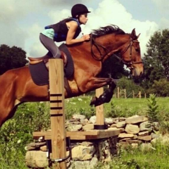 Archie. Photo courtesy of Caroline Teich via Sport Horse Nation.