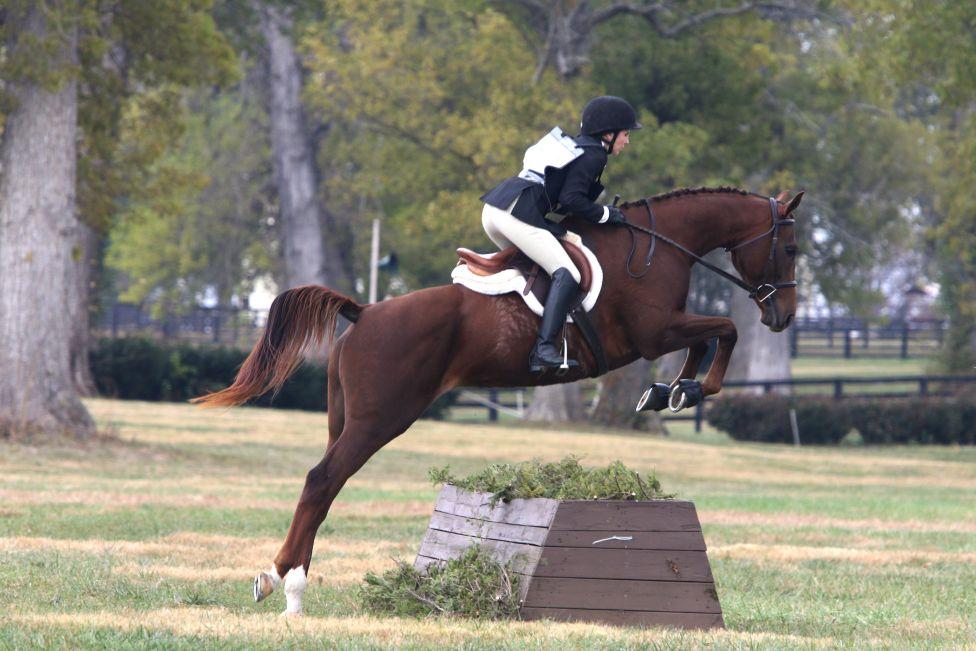 Racehorse turned field hunter! Photo courtesy of Lindsay Gilbert.