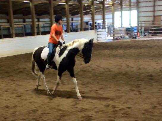 Patriot, a Saddlebred gelding given to me sight unseen, found his calling in dressage! Photo courtesy of Lindsay Gilbert.