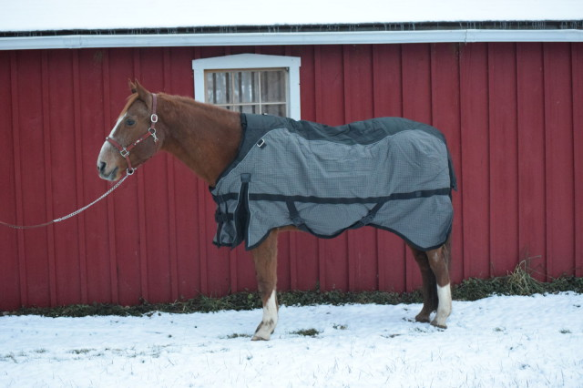 Added peace of mind can be granted to new owners of the Guardsman Turnout Blanket...because it even comes with a 4 year warranty and 2 year wash program! Photo by Lorraine Peachey.