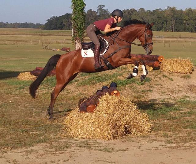Estefania. Photo courtesy of Daisy Trayford via Sport Horse Nation.