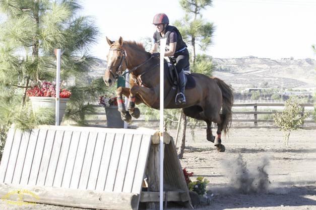Photo courtesy of Dawn Robbins via Sport Horse Nation.