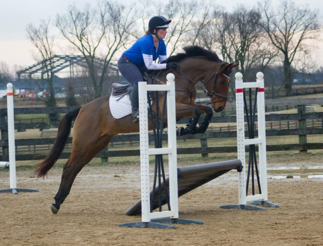 Photo courtesy of Megan Moore via Sport Horse Nation.