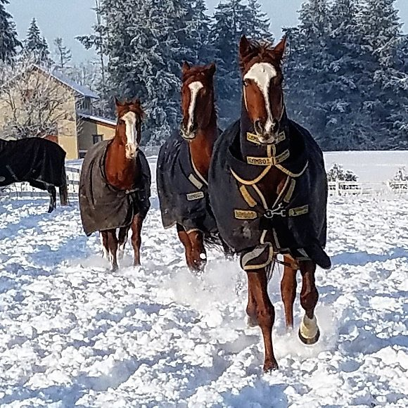 Dashing through the snow... From Katie Peery's Facebook page
