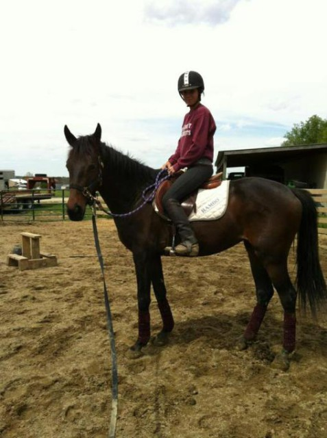 Ripley (now Bella) being backed for the first time! Photo courtesy of Lindsay Gilbert.