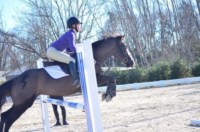 Mischief Managed. Photo courtesy of Cyndi Crosby via Sport Horse Nation.