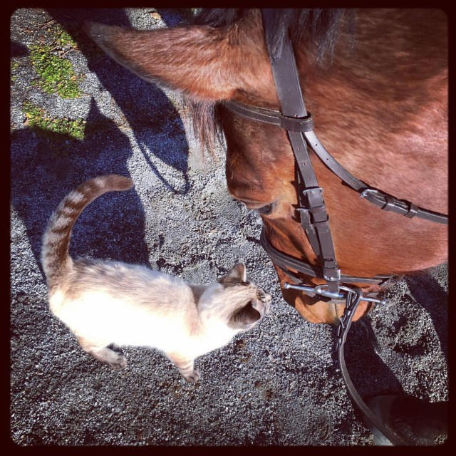 Beau and his kitty friend, Duplicat. Photo by Leslie Threlkeld.