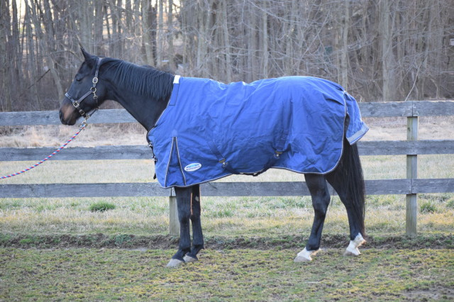 The Wither Relief Pad is another feature that I'm a big fan of, as it helps to provide additional comfort for Roo. Plus, it helps to reduce the rubbing on his sensitive withers. Photo by Lorraine Peachey.