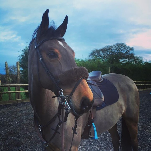 Abigail Boulton's Tilston Tic Toc after a training session at home. Photo by Tic Toc Eventing.