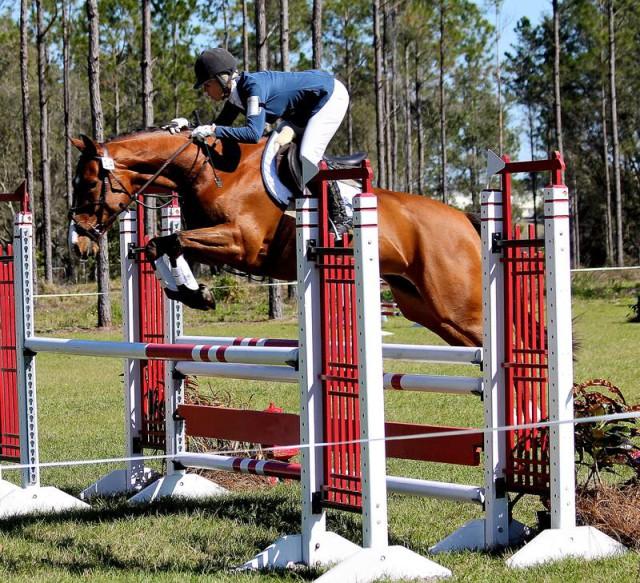 Delilah Z. Photo courtesy of Jennie Jarnstrom via Sport Horse Nation.