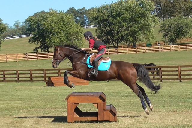 Ombudsman. Photo courtesy of Elissa Gibbes via Sport Horse Nation.