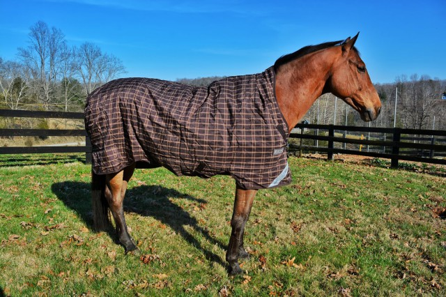 The multi-barrier system of the Horseware blankets makes sure that your horse stays dry and warm, even in the worst weather. Photo by Kate Samuels.
