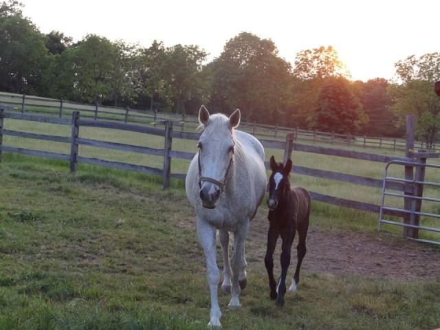 Photo courtesy of Wendy Furlong via Sport Horse Nation.