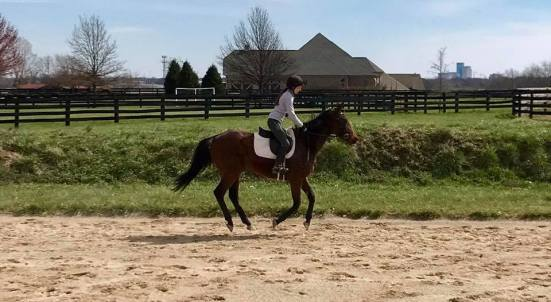 Ride number four and first canter! Photo courtesy of Lindsay Gilbert.