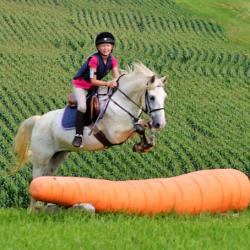 BamBam. Photo courtesy of C'est La Vie Farm via Sport Horse Nation.