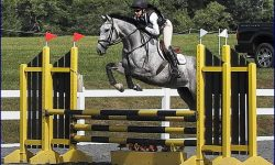 Best of craigslist thoroughbred horse eventing nation three day eventing news results for Craigslist lima farm and garden