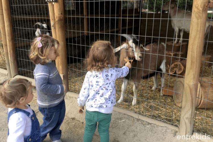 Una tarde perfecta de animales y juegos