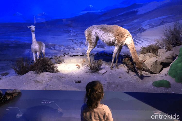 Asómbrate y aprende de nuestra flora y fauna