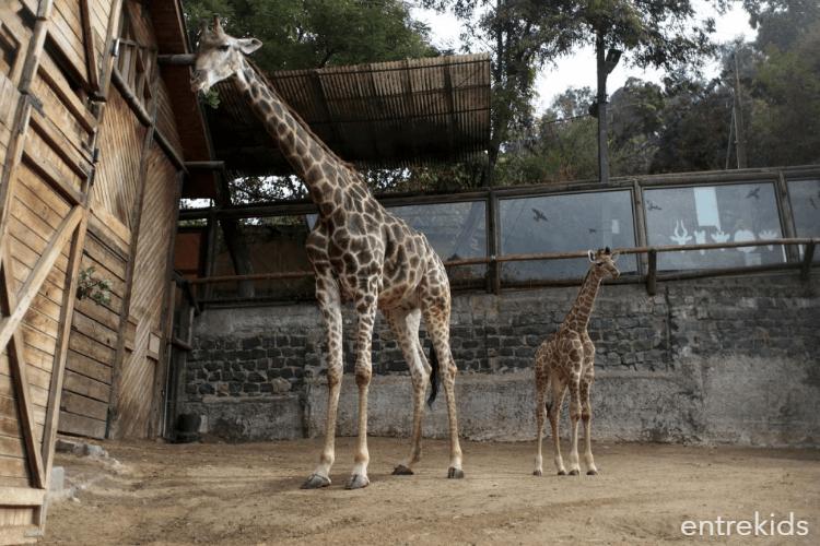 Disfruta del Zoologico Nacional