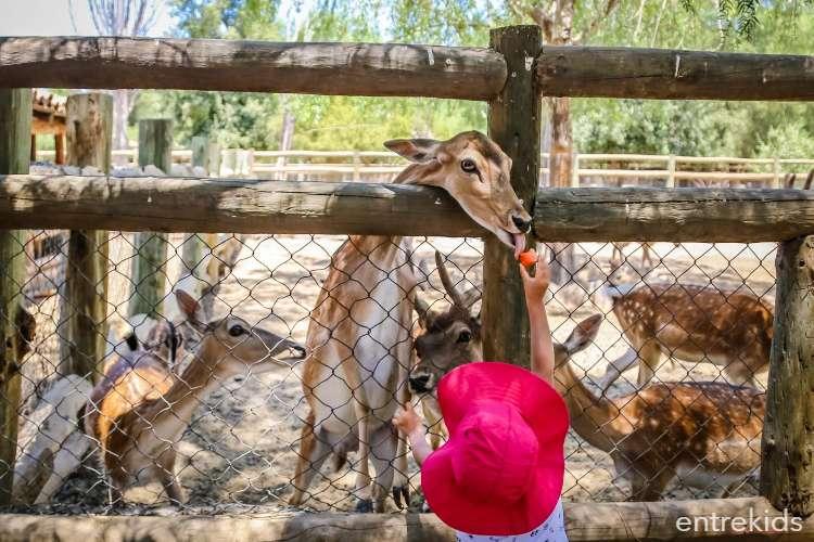 Alimenta a los animales en Lampa Zoo