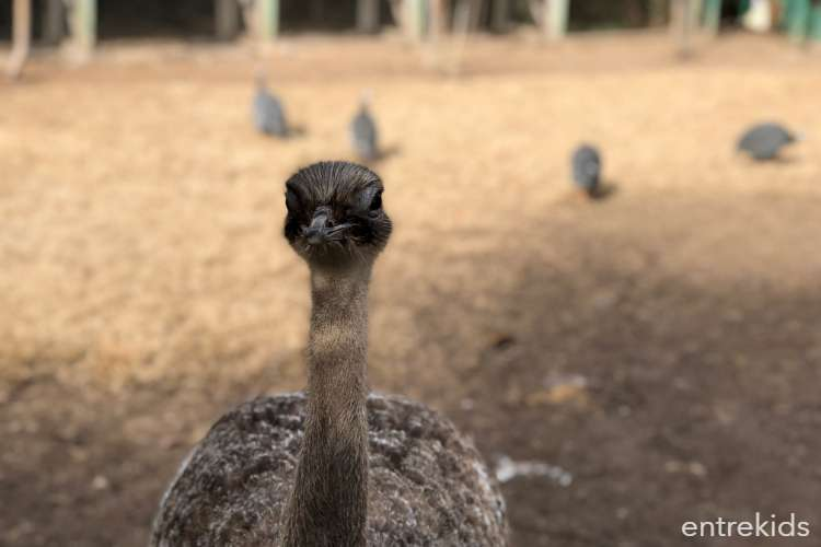 Visita guiada a Aves Pirque