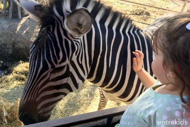 Parque Safari, una aventura salvaje!
