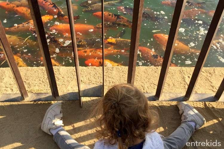 Día de paseo en la Laguna Piedra Roja