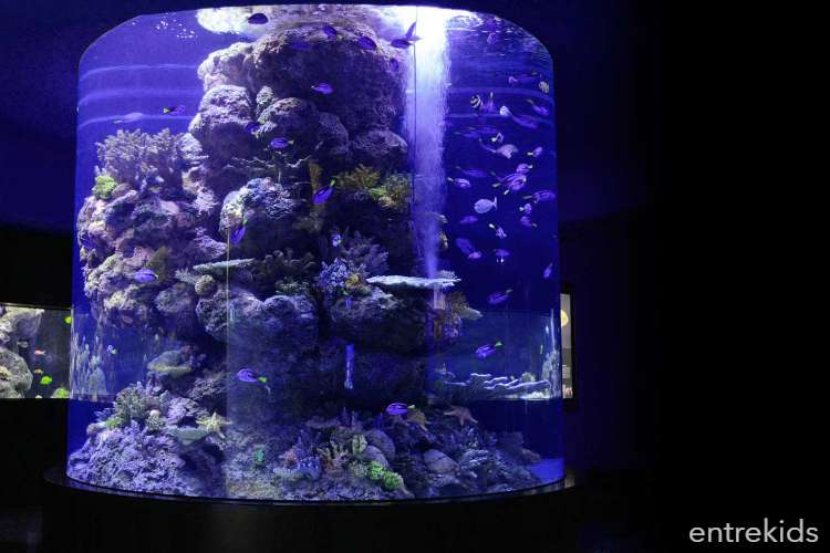 Ven a disfrutar en familia del Acuario Aquamundo - Aquarium