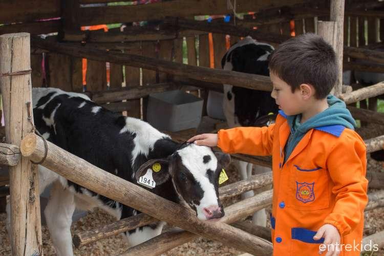 Piscinas y animales en Granja Educativa Lonquén