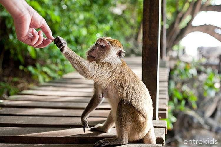 Centro de Rehabilitación y Rescate de Primates
