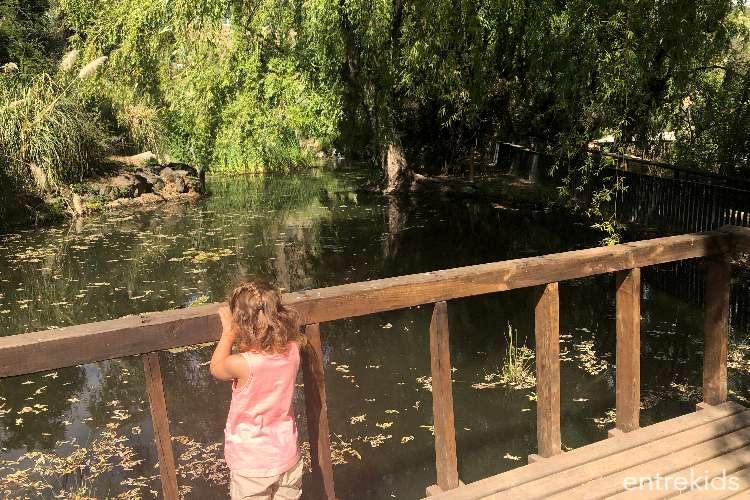 Bosque Santiago, explorando la naturaleza