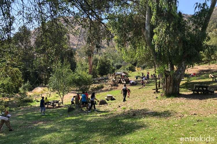 Camélidos en Bosque Santiago