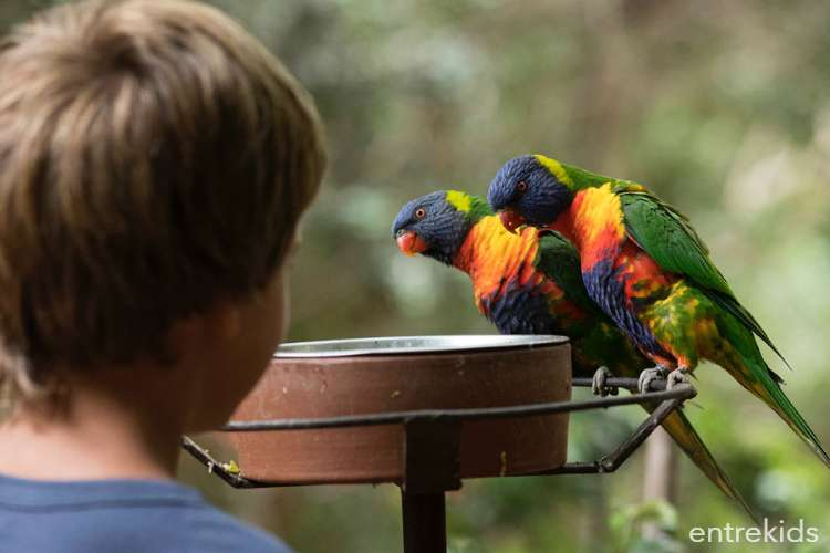 Aviario Parque Tricao, el más grande de Sudamérica