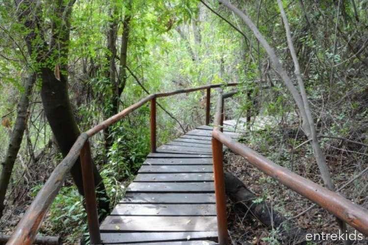 Trekking familiar en la Reserva Nacional Río Clarillo