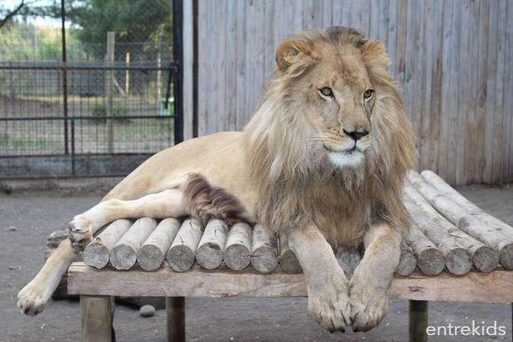 Fin de semana Santo en Zoológico Animals Park - Los Ángeles
