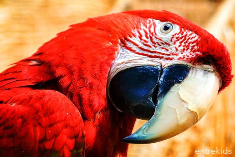Ven a Selva Viva en Copiapo