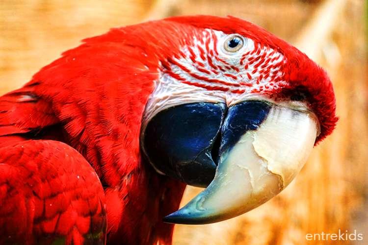 Ven a Selva Viva en Portal Rancagua