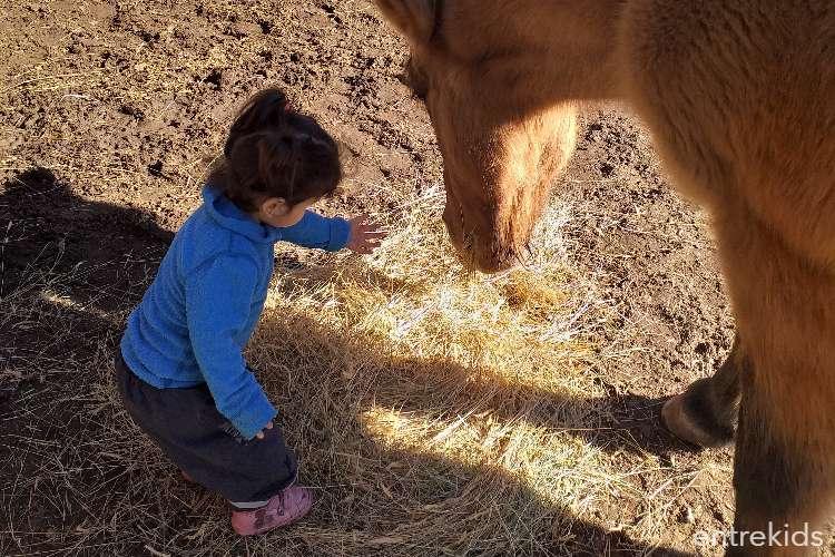 Terapia con caballos Hipoterapia Trekán