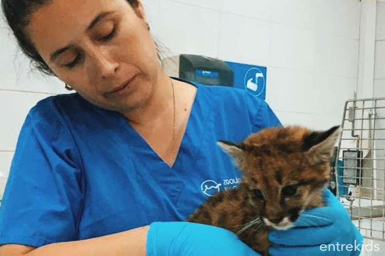Clinica Veterinaria del Zoologico Nacional - Oh! Stgo