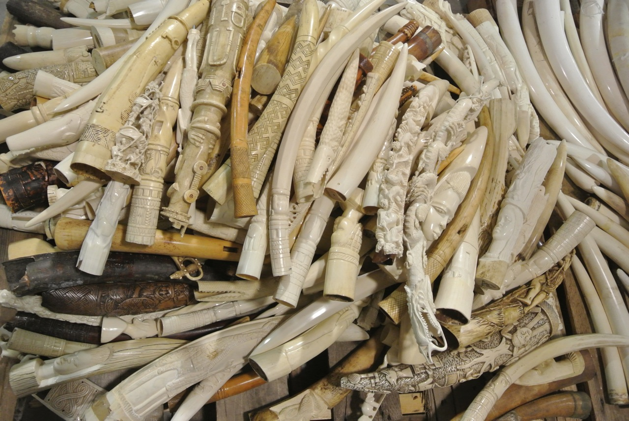 b778b8d13 We campaign for elephant range states and ivory consumer nations like Japan  to ban existing ...