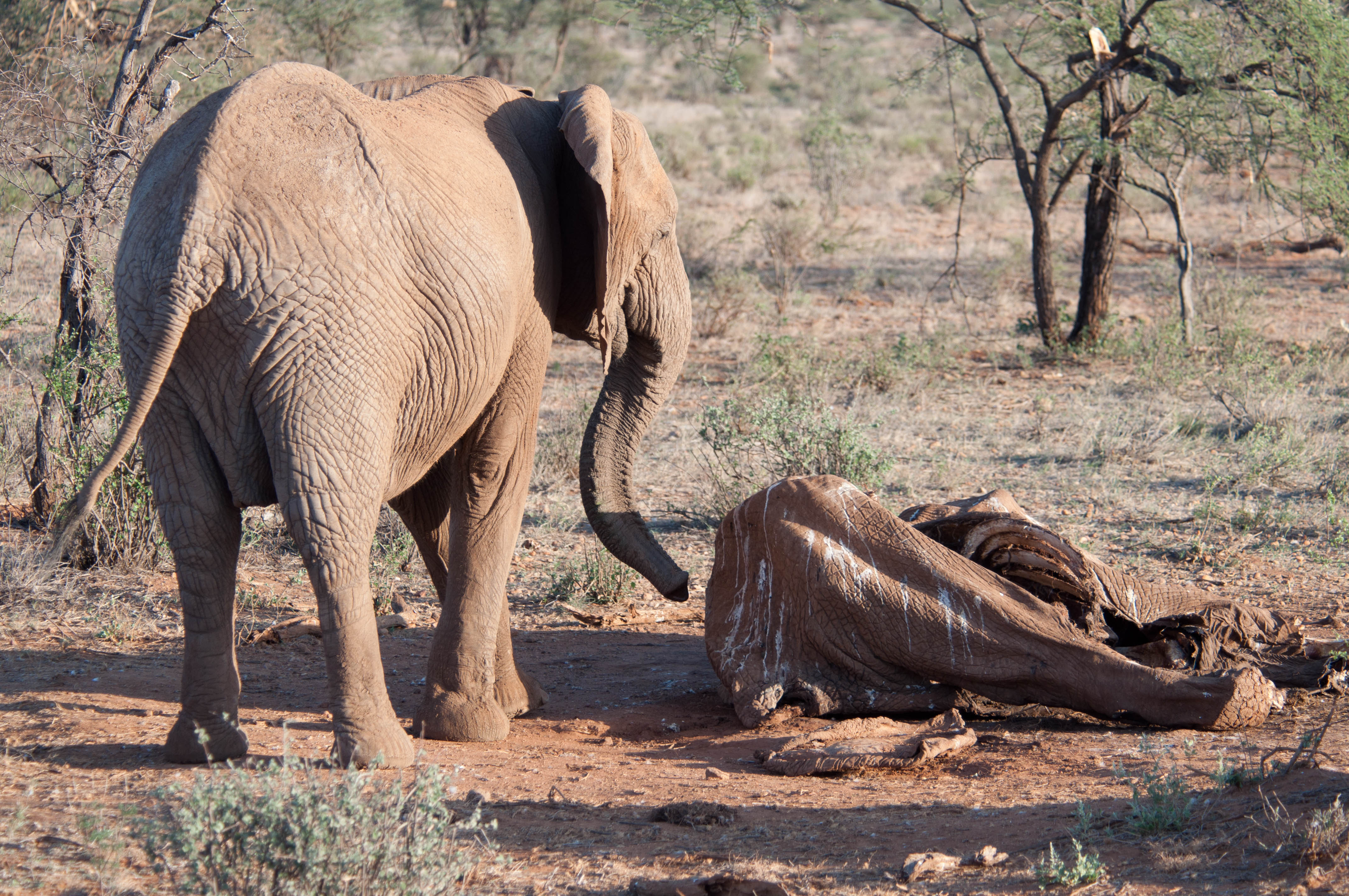 34ce898a9 EIA has been at the forefront of the global battle to halt the blood ivory  trade for over 25 years. In 1989