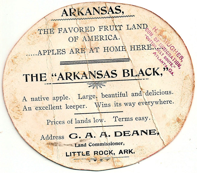 Arkansas Black Apple Ad