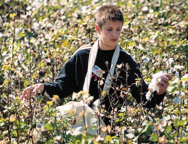 Gosnell: Cotton Pickin' Contest