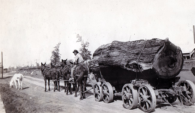 Cypress Logging